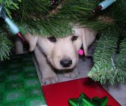 Állati karácsony, avagy kiskutya a nagy fenyőn